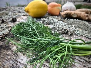 Dill with a lemon, garlic, onion, ginger on a rock with water in the background