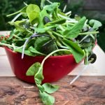 microgreens spilling from a bowl