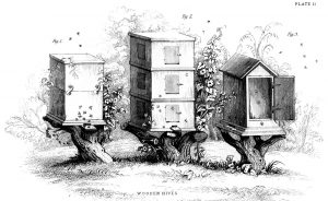 black and white sketch of three old fashioned bee hives with bees