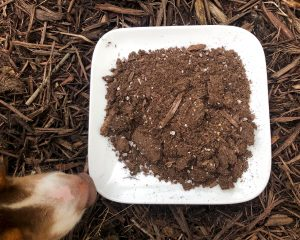 photo bomb of a dog smelling commercial soil on a plate