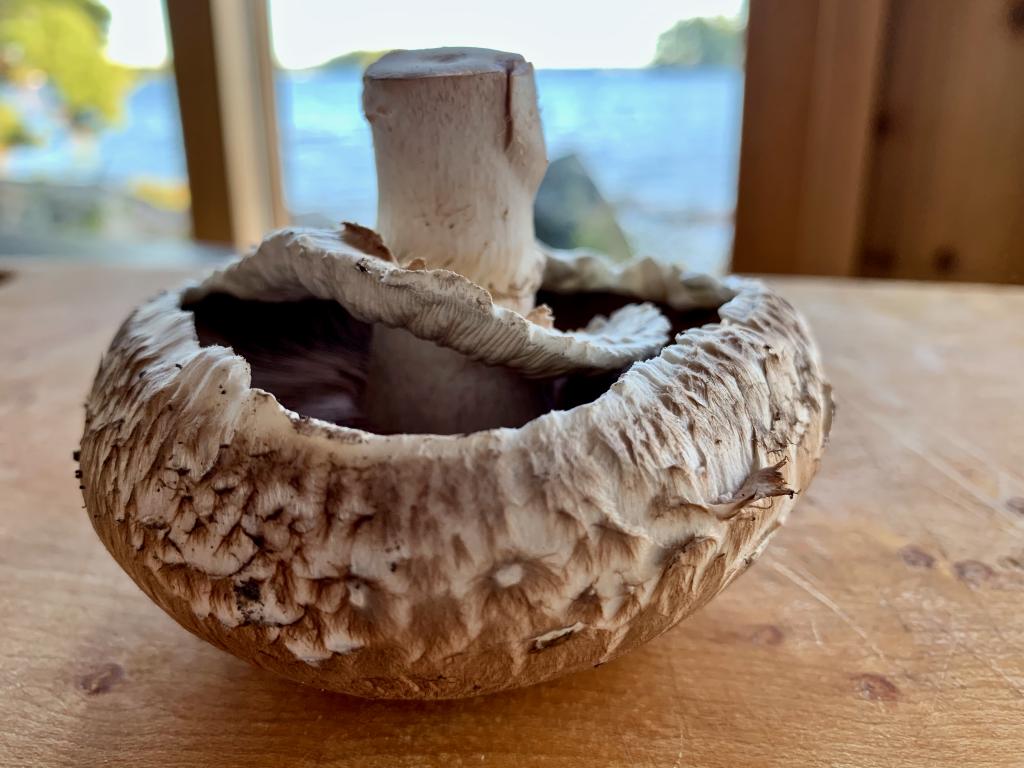 Portobello mushroom on a wood board