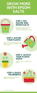 Infographic showing kid-friendly steps to gardening