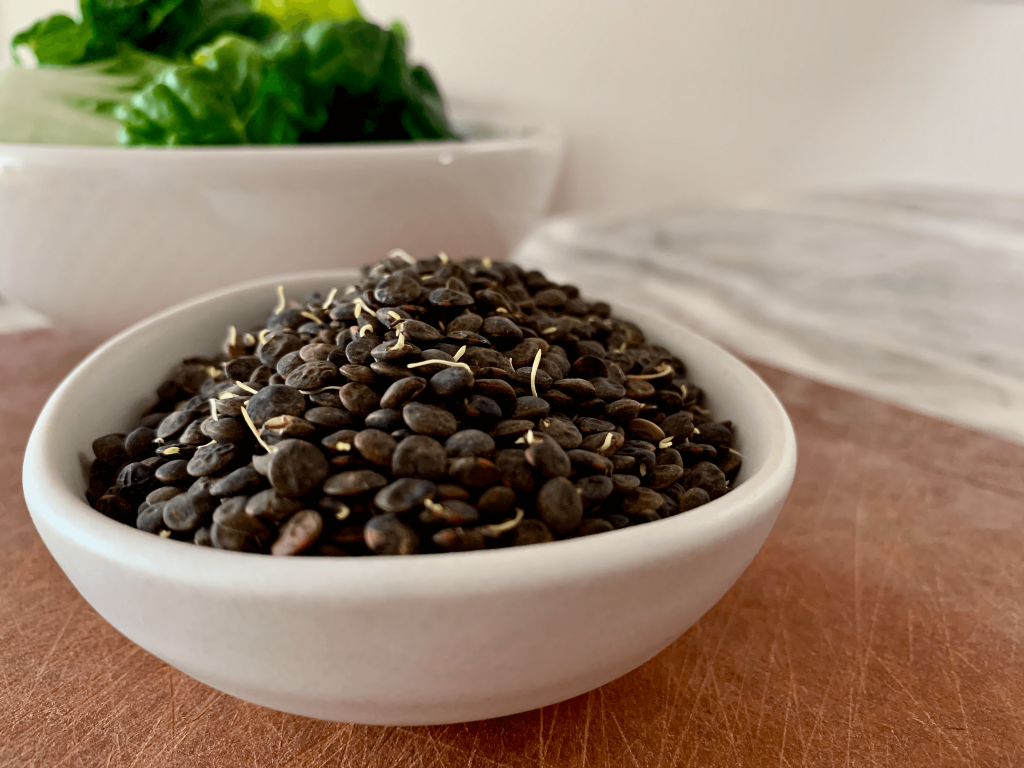 Sprouted lentils in a white bowl