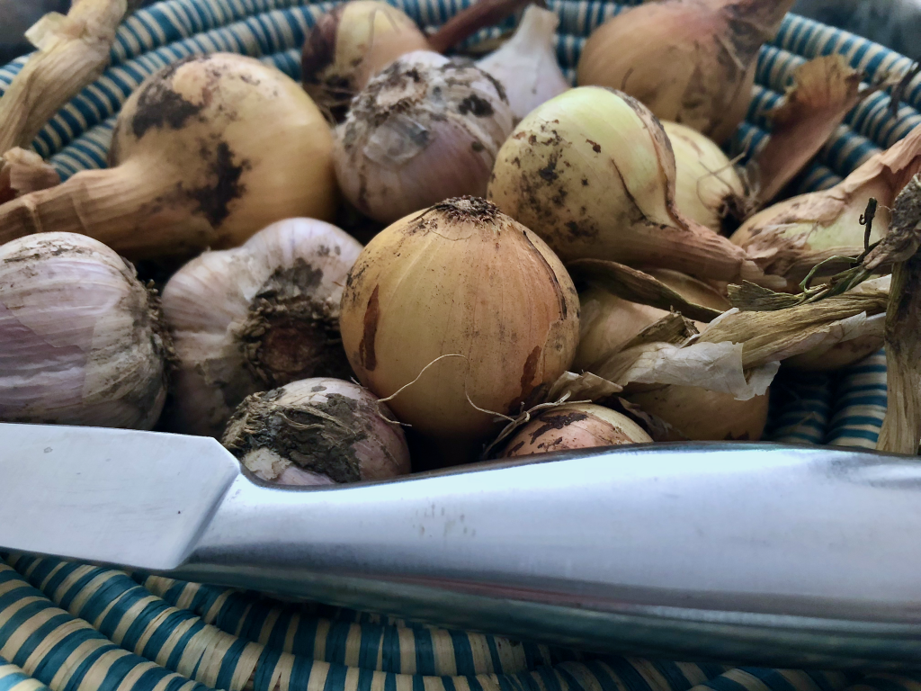 Organic homegrown onion and garlic