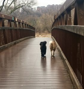Two dogs on a bridge in the rain