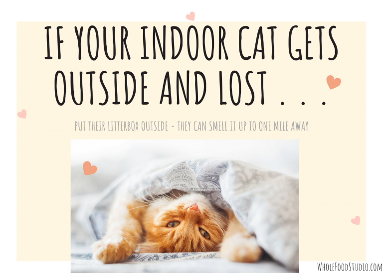 If your indoor cat gets outside and lost, put the litter box outside - your cat can smell up to one mile and be able to come back home