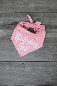 Dog bandanas that say Birthday Girl are cute on a dog