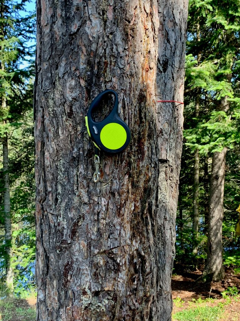Camping and a great way to find the dog leash is on the tree
