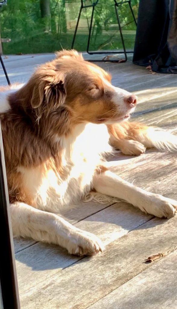Cooper sunning himself, eyes closed