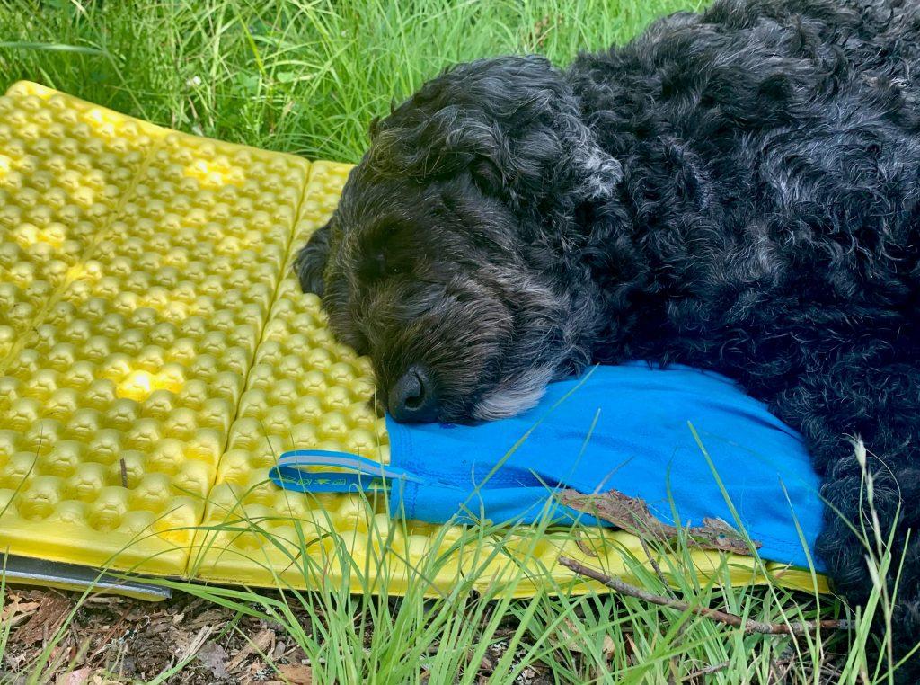 Molly asleep on her camping mattress